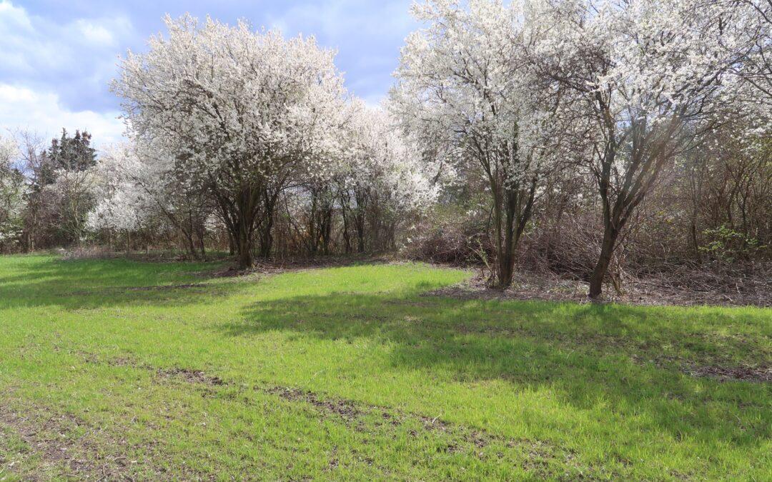 Urnenwald am Friedhof Gainfarn